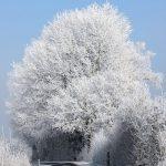 Februar 2017: Bäume, Äste, Blätter