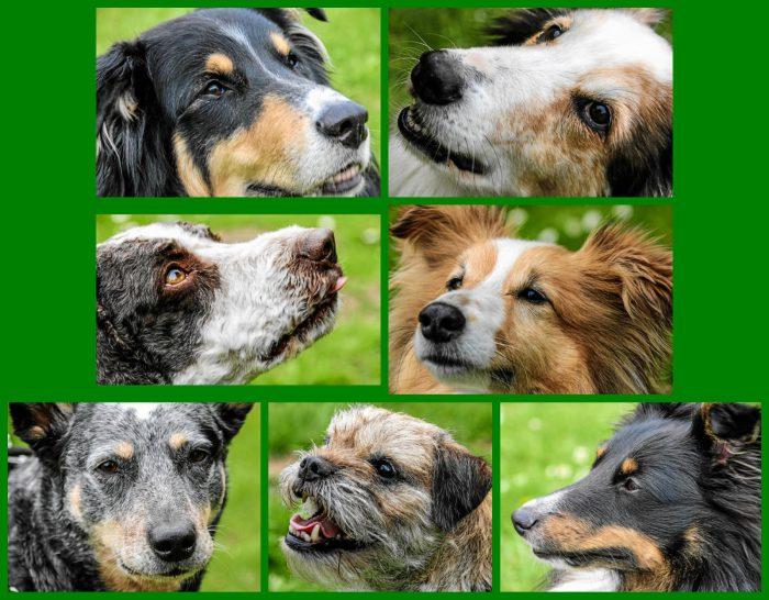 Hundeporträts